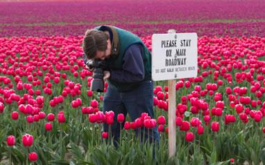 Dave Thompson in Tulip Fields 2012-04-22